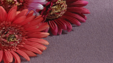 Abetone Carpet Collection